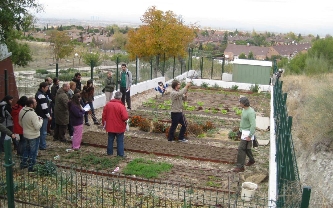 Desarrollo de programa de huertos urbanos