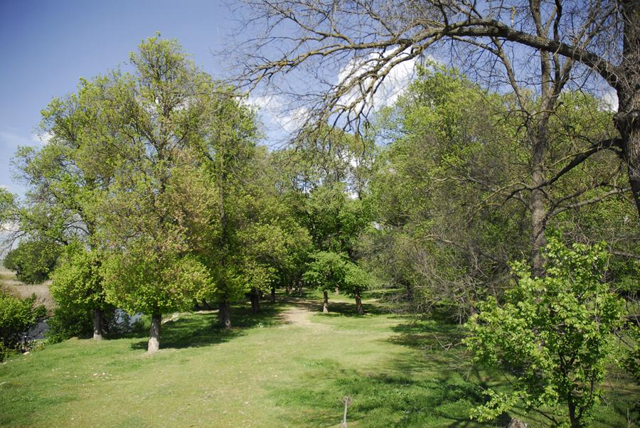 Inspección de árboles para evitar caídas de ramas